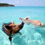 BahamaIslander242