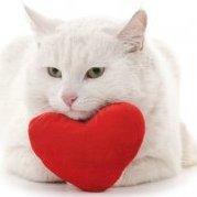 lovemeow
