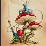 mushroomspore