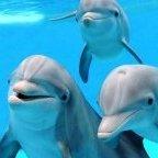 Dolphin_33
