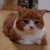 FROWNcat