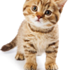 Nepo Cat