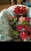 Bec_Dipu